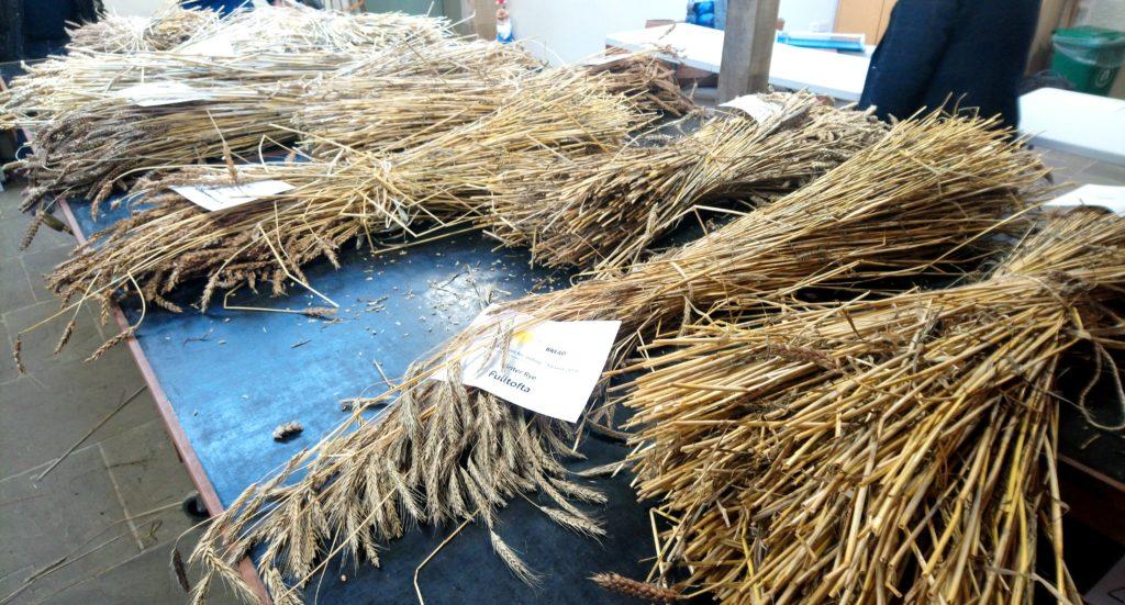 sheaves of different varieties of grain